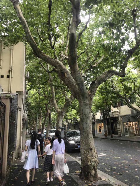 gator med alléer på sidorna